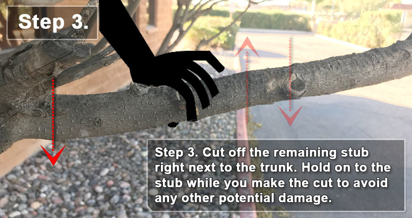 Step 3 - Make Your Final Cut Right Next To The Trunk