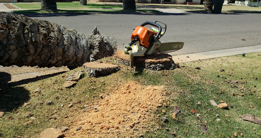 Tree Removal Scottsdale, Mesa, Tempe