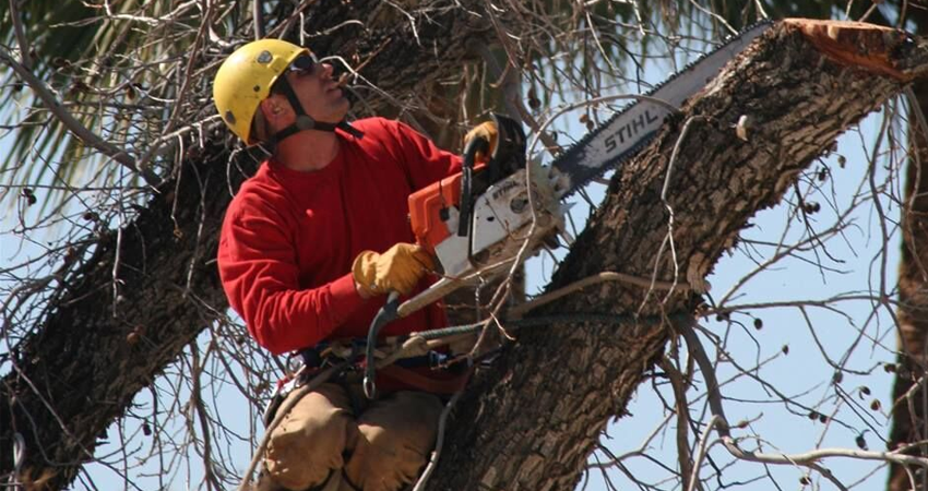 Tree Trimming & Pruning Scottsdale, Mesa, Tempe