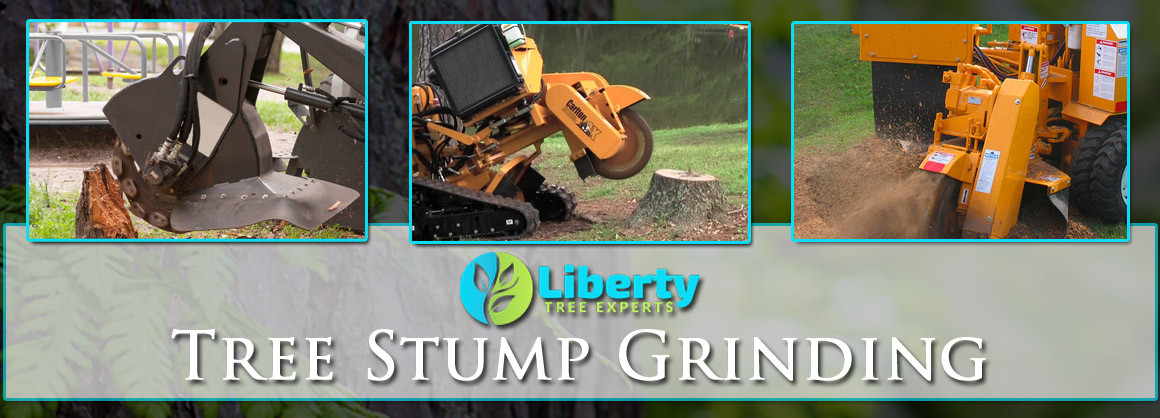 Tree Stump Grinding Scottsdale, Mesa, Tempe