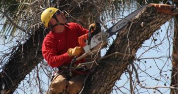 Tree Trimming & Pruning Scottsdale, Mesa, Tempe