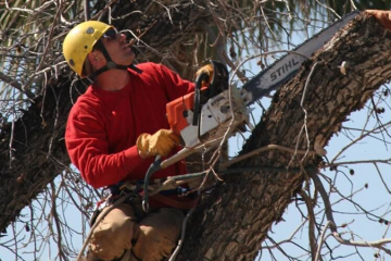 Tree Trimming & Pruning