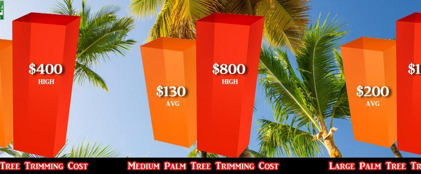 Palm Tree Trimming Costs - Small Medium & Large