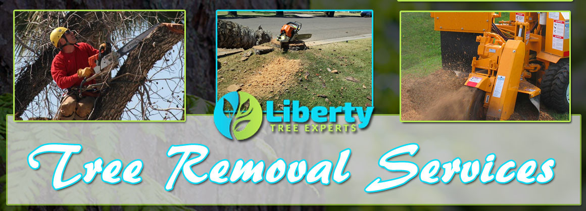 Affordable Tree Removal
