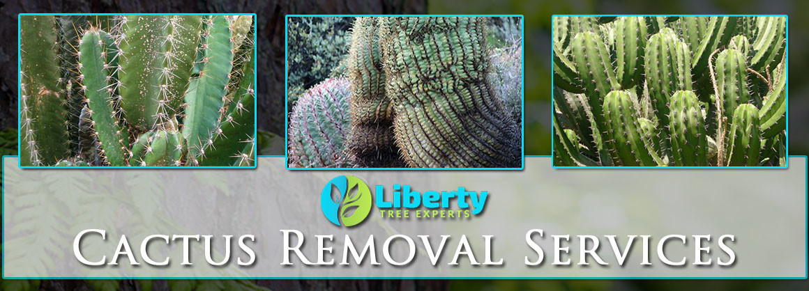Cactus Removal Scottsdale Tempe