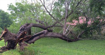 Storm Damage Tree Removal, Cleanup, Tree Service - Fallen Tree Removal