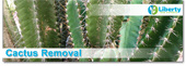 Cactus Removal Services