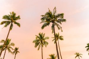 How To Bring A Dead Palm Tree Back To Life