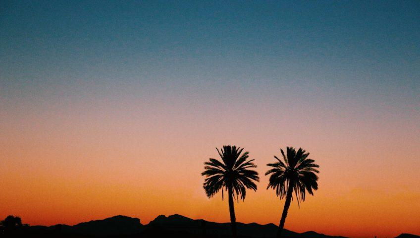 Arizona Shade Trees That Don't Shed