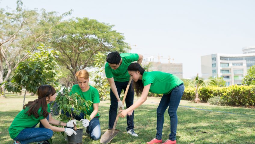 How Much Does Tree Planting Cost?